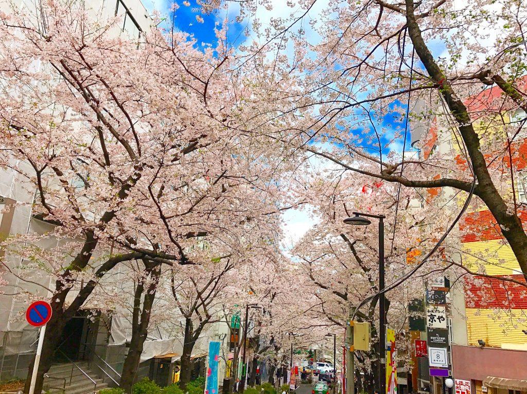 【渋谷駅徒歩3分】絶景すぎる桜丘の桜並木の目の前のカフェ✨
