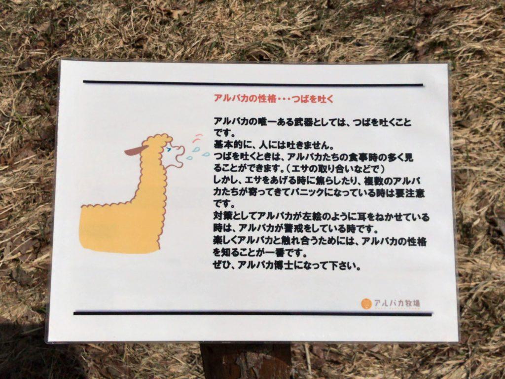 ③アルパカはツバを吐く?耳を横にしている時には要注意!
