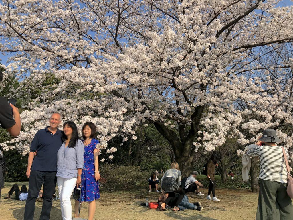 まるで海外!芝生に寝っ転がりながら桜の絶景を楽しめる!