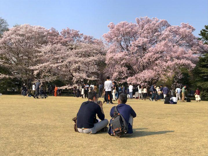 【皇居の歩き方】一般公開が凄い!上野公園よりも桜を楽しめる絶景スポットだった