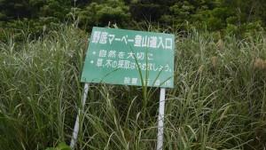 野底マーベ登山道