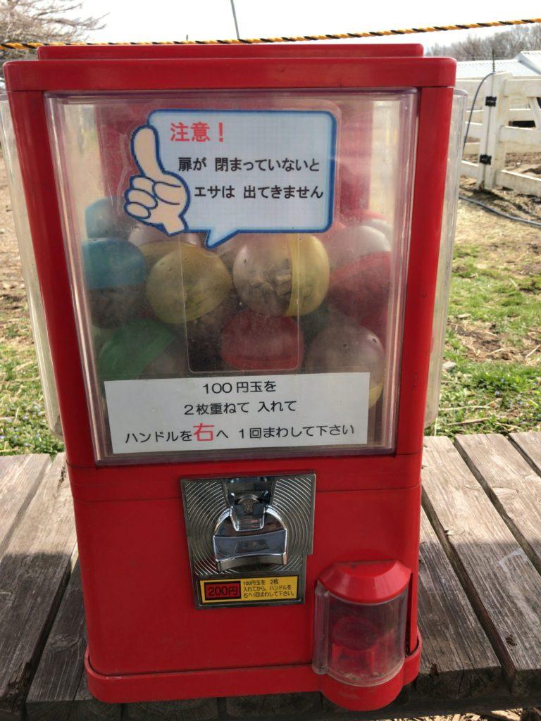 【理由②】餌はたったの200円!もふもふアルパカ触り放題