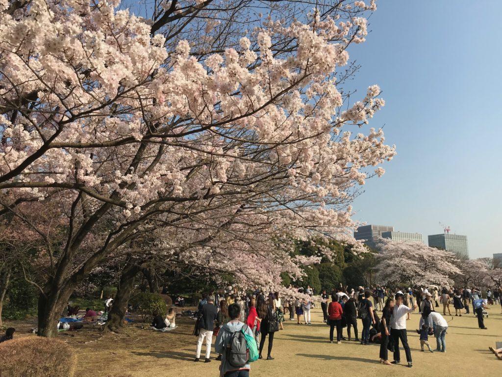 都内でこんなに空いている桜の花見スポットはここだけ!