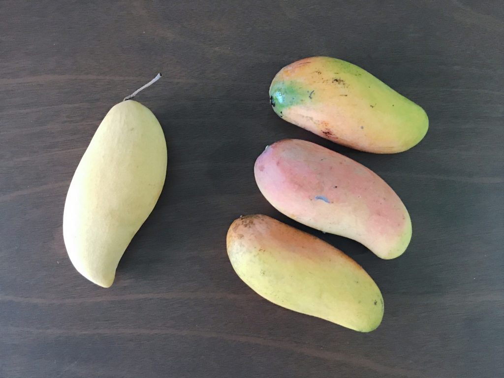 マンゴーを食べ比べてみた!