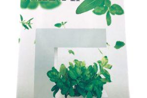 アカリーナとハイポニカで水耕栽培!室内で簡単に野菜を水栽培✨