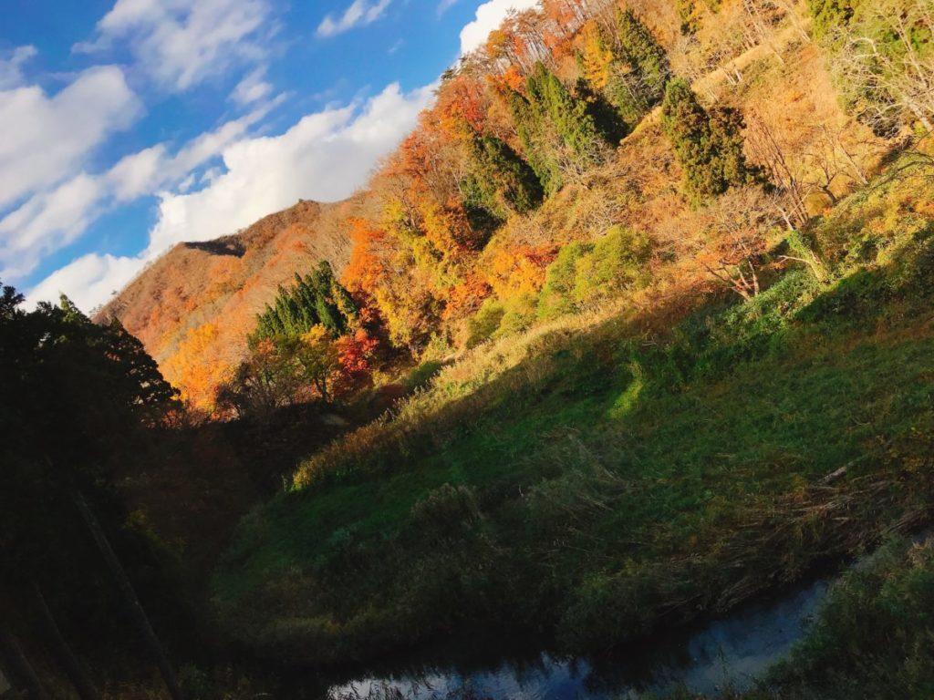 銀山温泉では例年10月下旬〜11月上旬に紅葉のピークを迎える